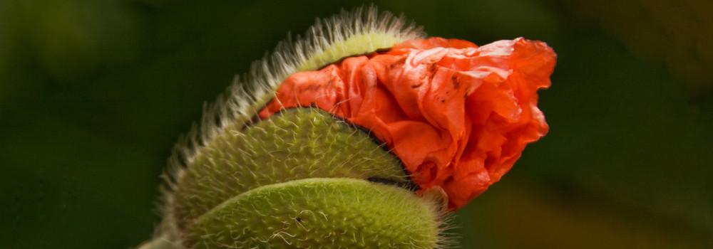 flower birth